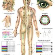 HUG/Plansza – akupunktura